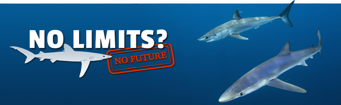 Shark-Trust-image-for-slide1